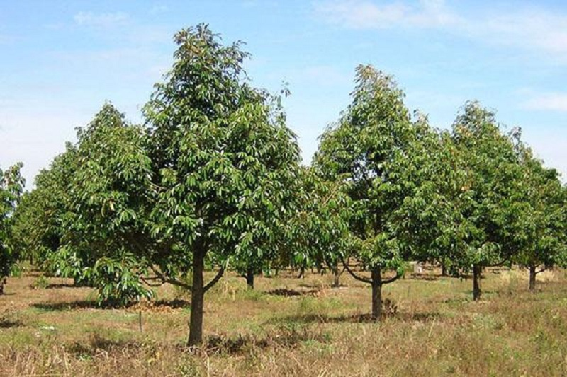 Trồng cây với vùng đất phù hợp