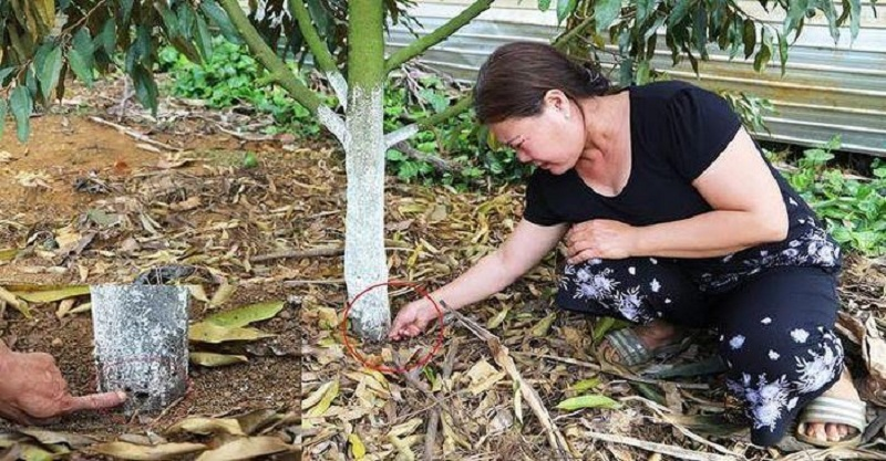 Sử dụng thuốc an toàn để chống nấm cây hiệu quả nhất