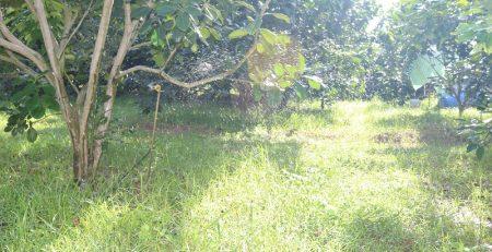 Quản lý cỏ dại