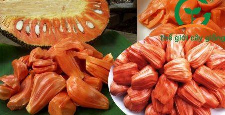 Mít ruột đỏ có màu sắc hấp dẫn, độ ngon ngọt và hương thơm đặc trưng