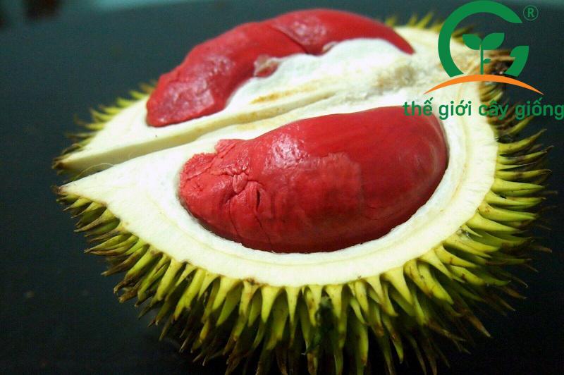 Sầu Sukang cũng thuộc loại Musang King